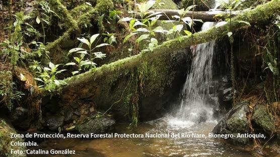 Bosque Rio Nare