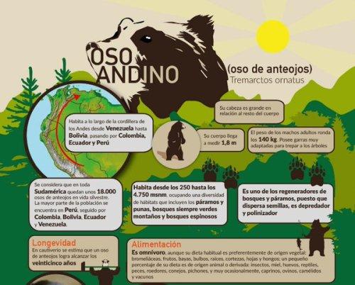 infografia osos andinos