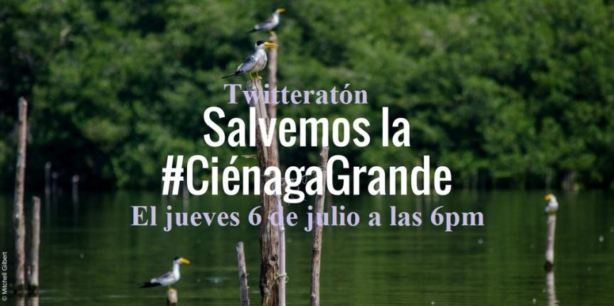 Este jueves 6 de julio twitteratón Salvemos la#CiénagaGrande