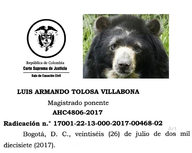 Corte Suprema de Justicia concede Habeas Corpus al oso de anteojosChucho